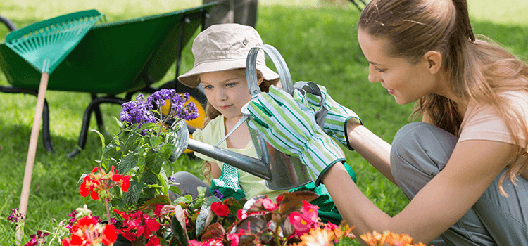 Lawn and Plant Care