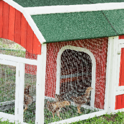 Tips on Building Your Own Chicken Coop