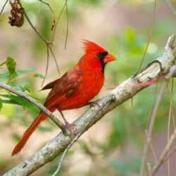 Backyard Birding Tips for Fall