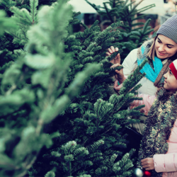 How to Care for Your Fresh-Cut Christmas Tree