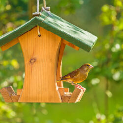 How to Attract Birds and Bird Feeding Tips