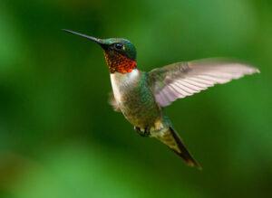 hummingbird bird feeding