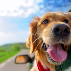 How to Protect Your Furry Friends in Summer Heat